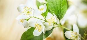 witte bloem hovenier